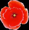 poppy, logo sm